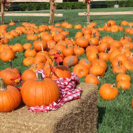 SOLD OUT! Woodbury's Fall Festival – October 21st from 3pm to 6pm