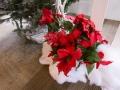 2014 Woodbury Christmas-11
